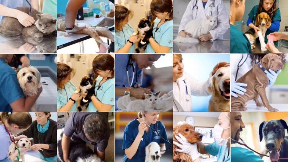 veterinarios.jpg